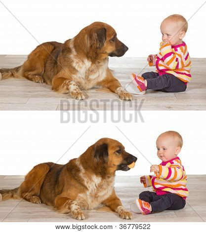 Generous Baby Sharing Biscuit With Dog