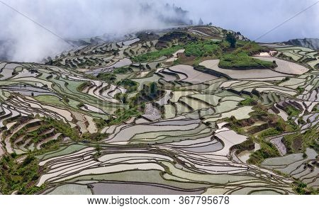 Panoramic View Of Terraced Rice Fields In Yuanyang County, Yunnan Province Of China