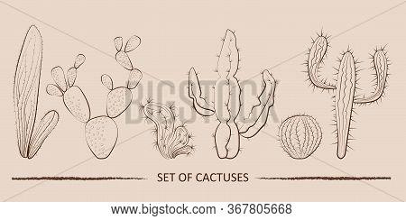 Vintage Cactuses Set, Great Design For Any Purposes. Vintage Botanical Illustration. Doodle Illustra