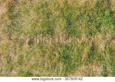 Lawn Briquettes With Dying Grass. Texture Of Dying Lawn With Healthy Green Grass And Dead Dry Grass