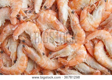 Shrimp Background