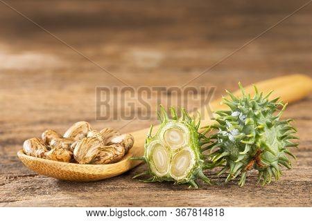 Green Castor Seeds - Ricinus Communis. Text Space