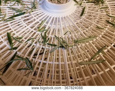 Rosemary Leaves In White Plastic Food Dehydrator