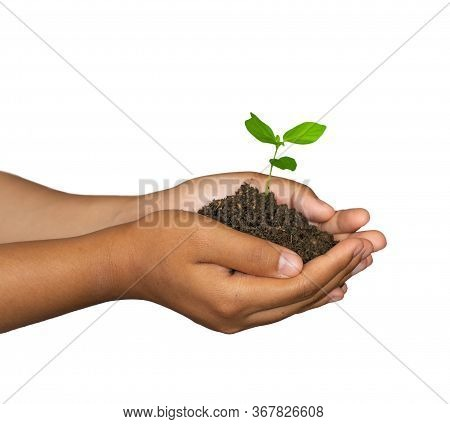 The Concept Of Afforest And Environmental Protection. Green Ecology. Hands Of Woman Holding Young Gr