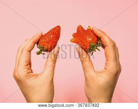 Usual And Ugly Strawberry In A Woman Hands, Concept Of Choice.
