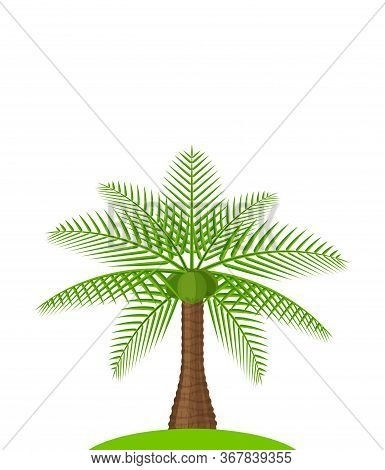 Coconut Tree Isolated On White, Illustration Coconut Palm Tree, Coconut Tree For Clip Art