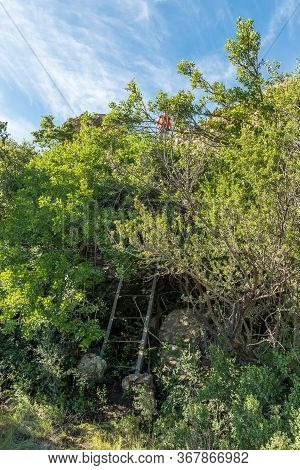 A Hiker Above A Ladder On The Eland Hiking Trail At Eingedi Near Ladybrand