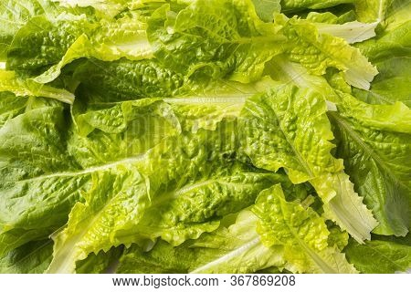 Top View. Lettuce Leaves. Background Of Lettuce Leaves. Fresh Leaves Background. Texture Lettuce Clo