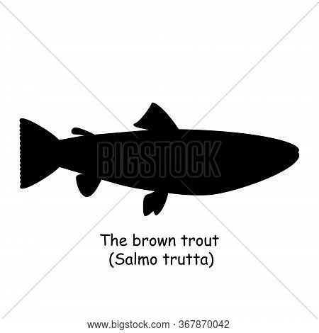 The Black Silhouette Of The Brown Trout (salmo Trutta) Is Isolated On White Background.