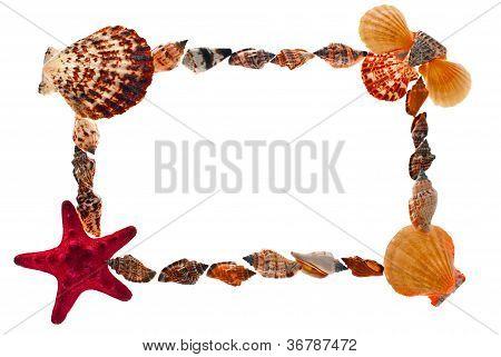 Frame Of Sea Shells