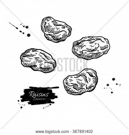 Raisins Vector Drawing. Dried Grape Objects. Hand Drawn Dehydrated Fruit Illustration.