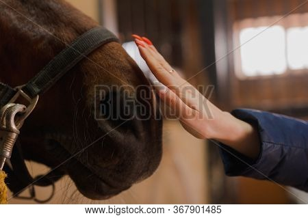 Woman Stroking A Horse Standing In Corral On Farm. The Concept Of Human-nature Relations. Animal Car