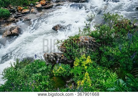 Fresh Greenery On Mossy Rock Near Mountain Creek With Rapids. Wonderful Scenic Landscape With Mounta