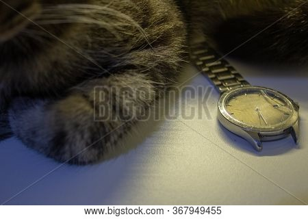 Broken Wrist Watch, With Its Glass Shattered And Damaged Bracelet, Next To A Cat
