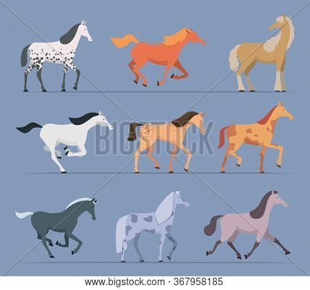 Horses. Breeds Domestic Strong Racing Animals Walking And Jumping Horses Vector Cartoon Characters.