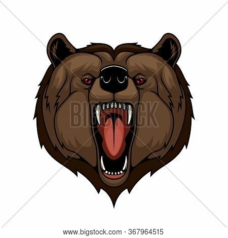 Angry Grizzly Bear Animal Head, Isolated Mascot. Attack, Wild Predatory Animal With Open Mouth And S