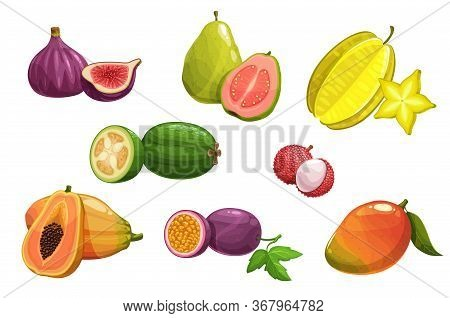 Tropical Fruits, Vector Fig, Carambola And Papaya, Mango, Guava And Passion Fruit, Feijoa And Lychee