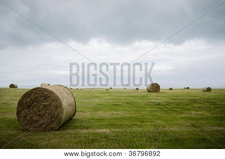 Harvested Field With Straw Bales In Winter
