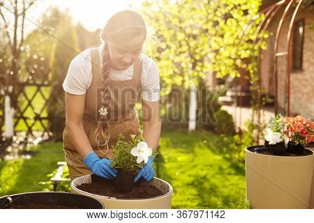 A Young Blonde Gardener Girl Is Transplanting Flowers In The Garden On A Sunny Day. Transplanting Pl