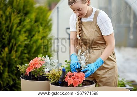 A Young Beautiful Female Gardener Transplants Flowers Into Large Ceramic Vases In The Garden. Plant
