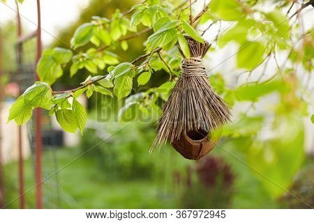A Birds Nest Made From Coconut Shells And Straw Hangs On A Tree In The Garden. An Empty Birds Nest A