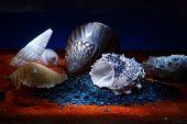 Still life with seashells .Macro shooting.Seashells on the table poster