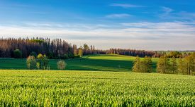 Beautiful Green Spring Rural Landscape With Green Field. Rural Landscape. Spring Landscape. Agricult