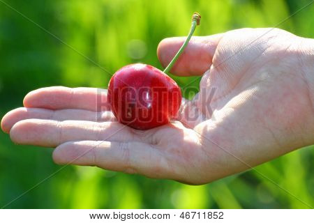 Hand Of A Child Who Holds The Mature Red Cherry