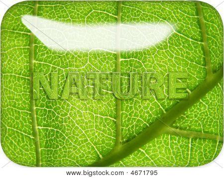 Nature Through Glass