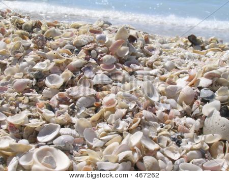 Shells By The Ocean