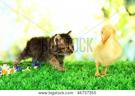 Cute duckling and fluffy kitten on green grass, on bright background poster