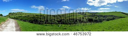 Panoramic view over rolling hills