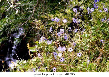 Creekside Wildflowers