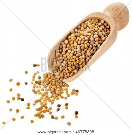 Mustard seeds in wooden scoop spoon isolated on white background