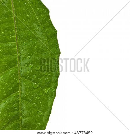 Border texture of green leaf of a tree Passion Fruit close up macro shot set isolated on white background
