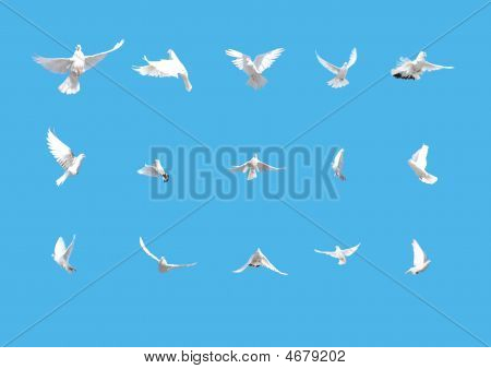 Set Of White Doves Flying Isolated On Blue