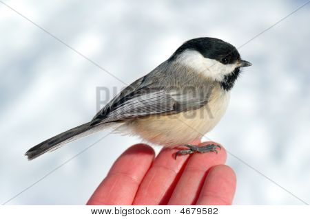 Bird In The Hand 2