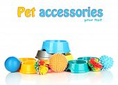 Pet accessories isolated on white poster