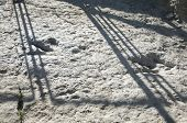 real dinosaur track on stone public free access at la rioja spain poster