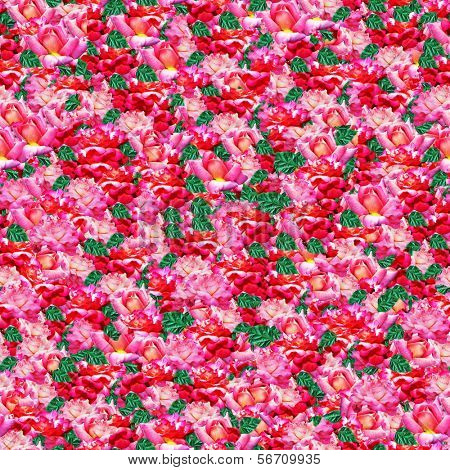 carpet  from  roses seamless background
