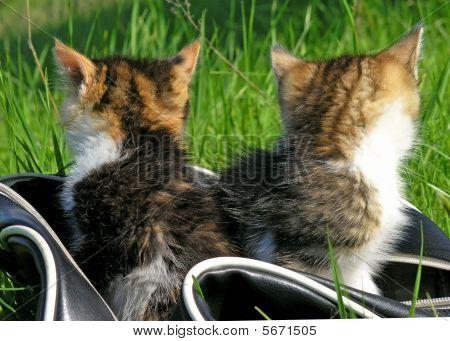 Little Kitten Playing