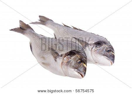 Two Dorado Fish Isolated On White