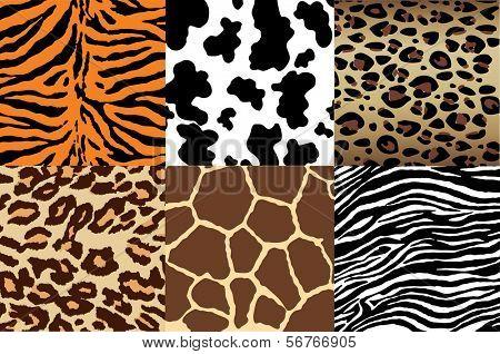 Animal Print backgrounds