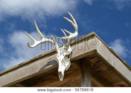 Deer Head Mounted on a Cabin