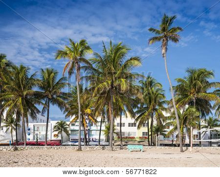 MIAMI, FLORIDA - JANUARY 6, 2014: Palm trees line Ocean Drive. The raod is the main thoroughfare through South Beach.