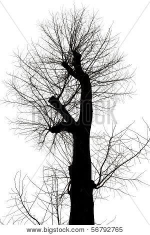 Bare Tree With Cut Branches In Winter