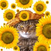 Cat with sunflowers falling in front and behind her. poster