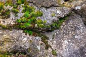 wall of sharp stones with sprouted moss poster