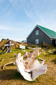White Whale bones in Djupalonssandur museum Iceland poster