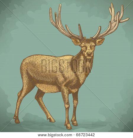 Vector Engraving Of Reindeer Retro Style